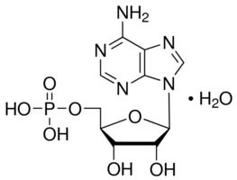 Adenosine 5′-monophosphate CAS 61-19-8