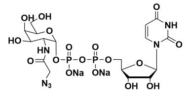 UDP-GalNAz.2Na CAS 653600-61-4