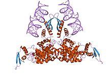 RNase III CAS UENA-0194